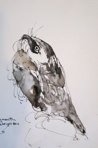 Frogmouth-Mixed Media on Paper