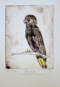 Black Cockatoo Hand coloured dry point