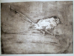 Fairy Wren Etching SOLD