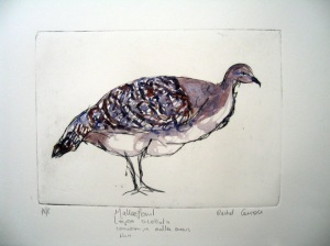 Mallee Fowel, Hand coloured Dry Point, 1/10