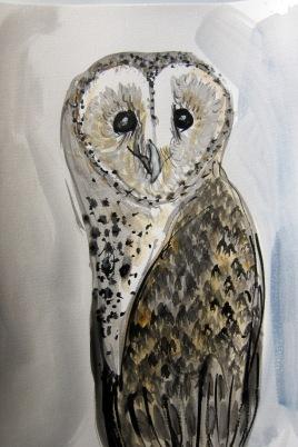 Barn Owl Ben RACHEL CARROLL