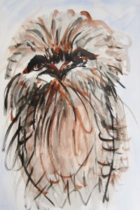 Frogmouth TOM