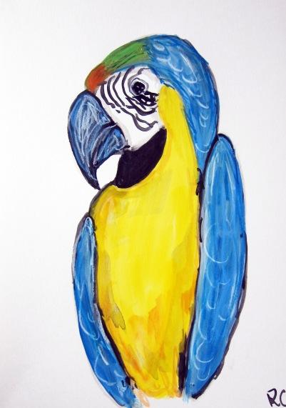 Macaw Jimmy
